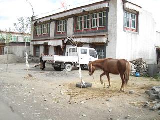 Horse & truck parking