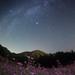 Autumn buckwheat galaxy by masahiro miyasaka