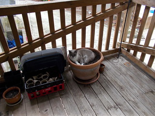 Potted Cat!