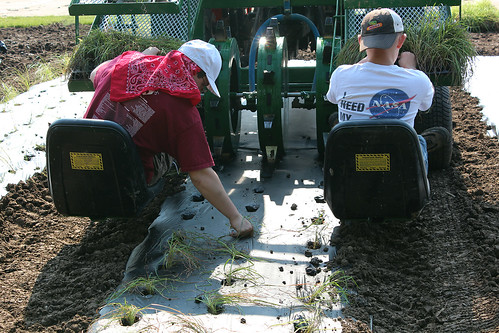 Boy scouts from a local troop planted grasses while sitting on the back of a mechanical planting machine. USDA photo.