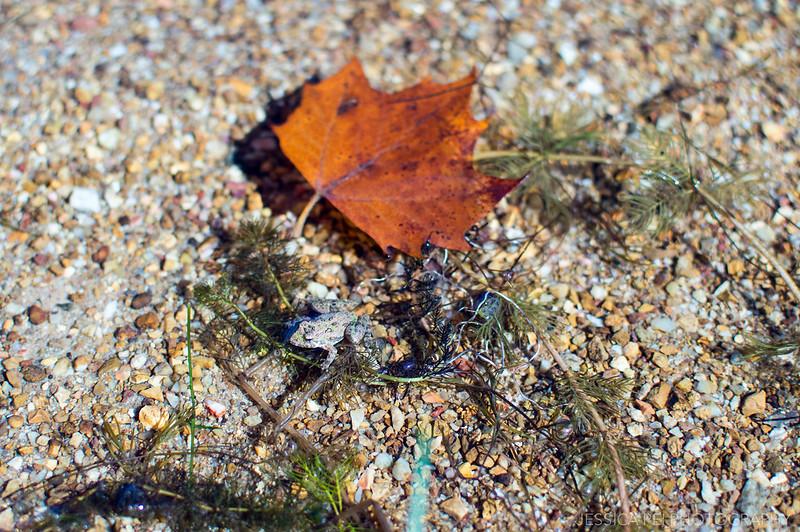 frog lake nature animals leaf