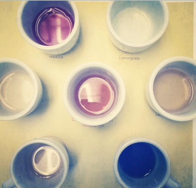 Celestial Seasonings tea tasting