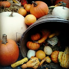 Autumn Harvest - Colorful Gourds on Display