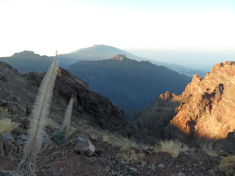 Vacaciones Guela. La Palma. 73 fotos 15302443379_f35126c166_b