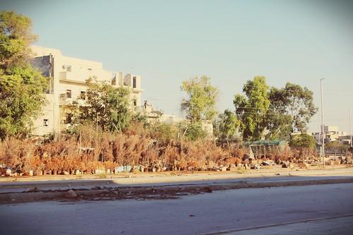 حلب هنانو