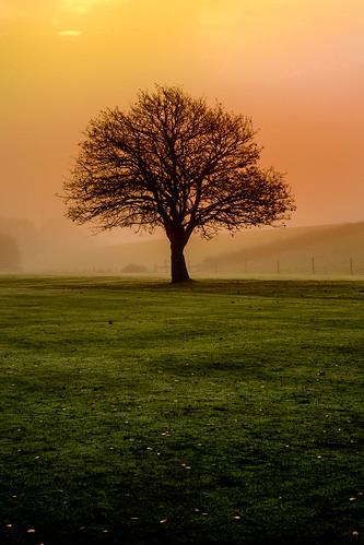 sunrise xpro1 fujifilmxpro1 fujifilm nikkorf1850mm stevenmcdougall tree autumn stevenmcdougallphotographer clydebankphotos clydebankphotography clydebankphotosgmailcom