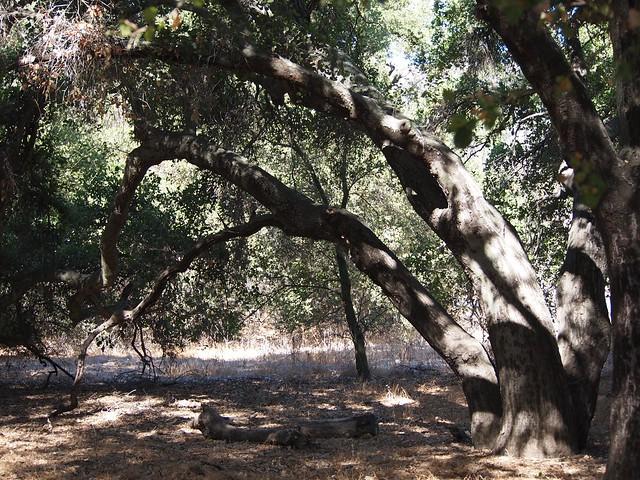 Oaks at Rocky Oaks Park