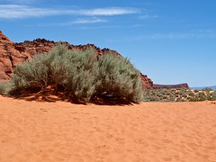 sea(0.0), dune(0.0), erg(1.0), soil(1.0), sand(1.0), aeolian landform(1.0), geology(1.0), natural environment(1.0), plateau(1.0), desert(1.0), terrain(1.0), landscape(1.0), wadi(1.0), sahara(1.0), badlands(1.0),