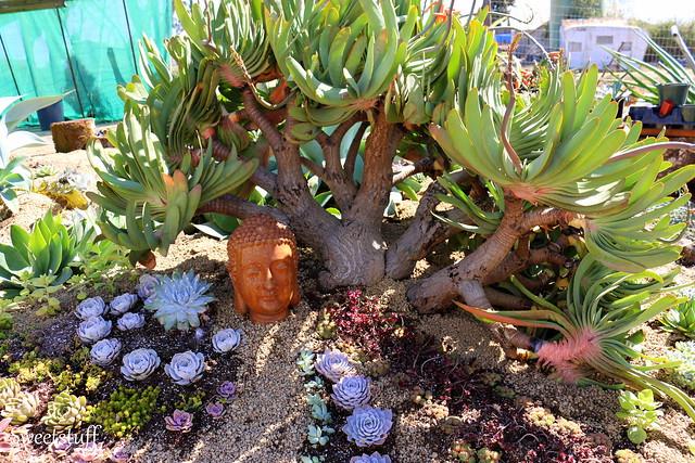 Succulent Extravaganza 2014 Part 2 Display Gardens