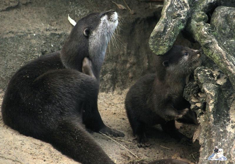 Berliner Zoo 30