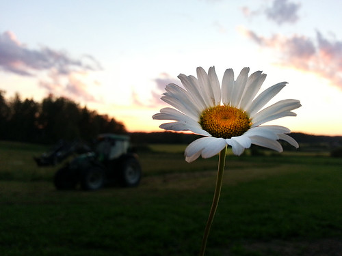 sunset summer tractor nature beautiful suomi finland evening countryside finnland sundown dusk country daisy finlandia フィンランド finlande finlândia finnország finlanda finlàndia финляндия finnishsummer finnlando فنلندا