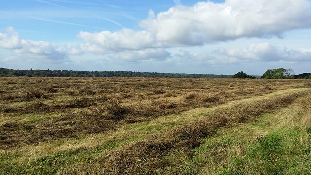 Skylark Meadow #LondonLOOP #sh