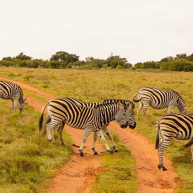 Bilder der Woche 1 aus Südafrika