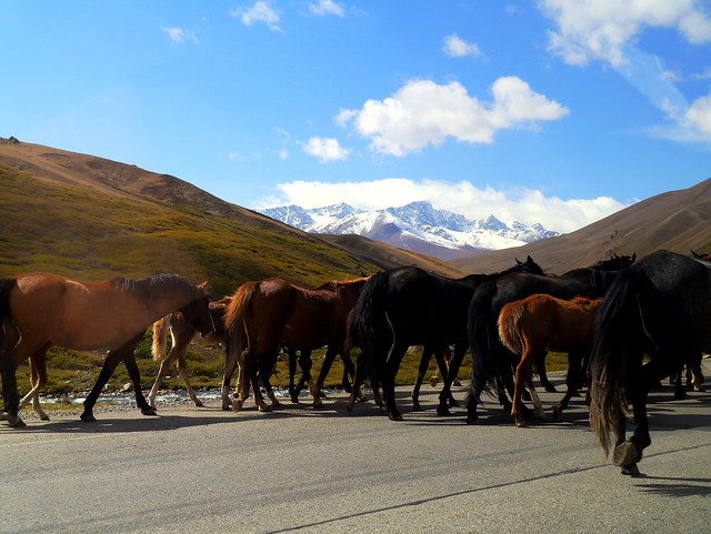 4) Horse Crossing