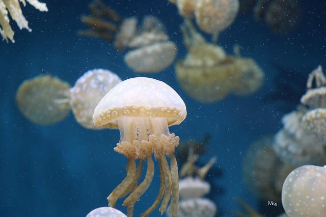 monterey bay aquarium 134