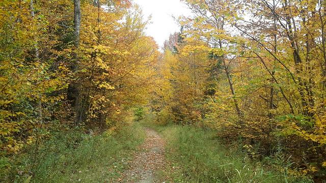 Hiking trail at Burke  Mountain