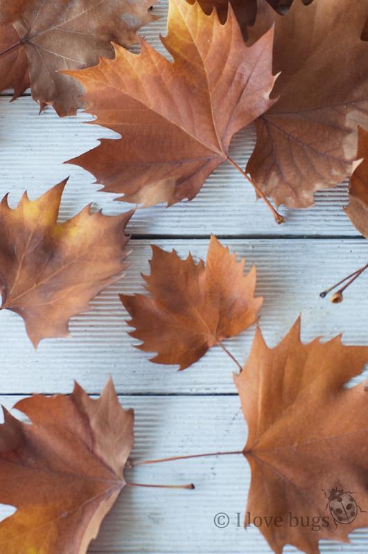 portavelas hojas