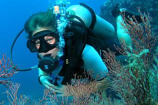 "<img src=""padi-diving-chebeh-tioman-island-malaysia.jpg"" alt=""PADI diving, Chebeh, Tioman Island, Malaysia"" />"