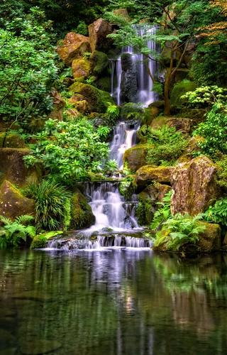 fall water oregon garden portland landscape japanese japanesegarden waterfall pond nw northwest or peaceful falls waterfalls pacificnorthwest tranquil amati alanamati fallsatthejapanesegarden
