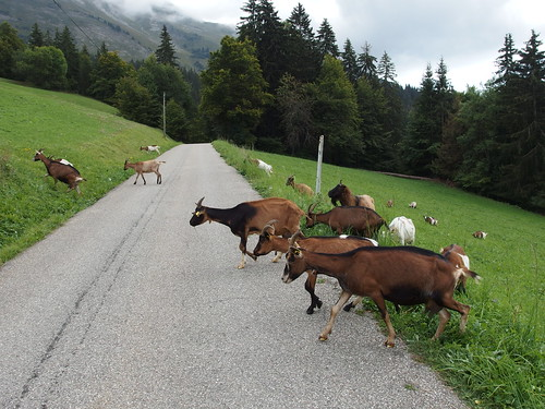 Goats @ Hike to Mont Charvin