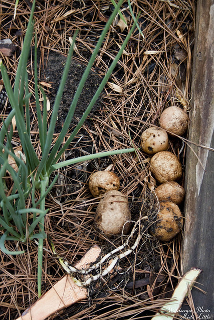 straypotatoes