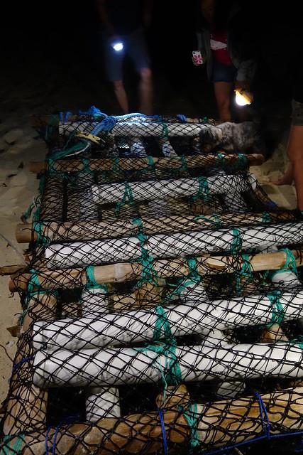 09252014 Crab Hunt (4)