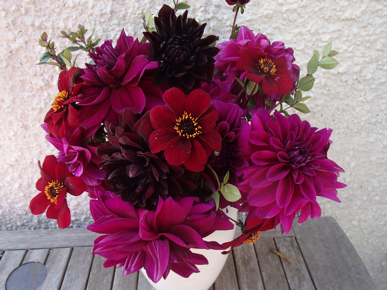 dahlias-looking-lovely