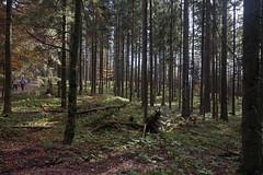 2014-10-12 Tegernsee 052 Ostiner Berg