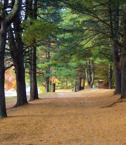 Wasserman Park