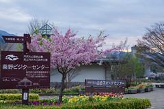 戸川公園は華やかです