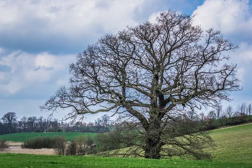Mein Freund der Baum-01818