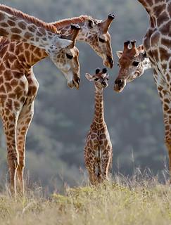 animal family014