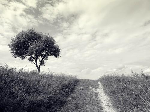 road summer sky blackandwhite bw tree nature clouds landscape path poland polska lodzkie łódzkie