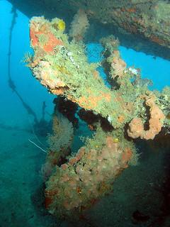 """<img src=""""padi-diving-salang-bay-wreck-tioman-island-malaysia.jpg"""" alt=""""PADI diving,Salang Bay Wreck, Tioman Island, Malaysia"""" />"""