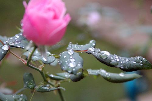 raindrops5