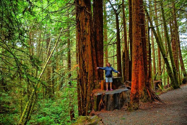 Redwood Empire Food Bank Volunteer Opportunities
