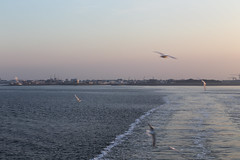 Den Helder, from the boat to Texel