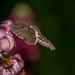 Nectar,nectar... MY nectar. by Timo Halonen