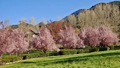 Shades of Pink, Oak Glen 3-13