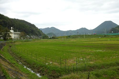大川橋付近
