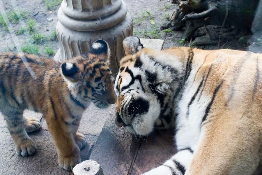 dierentuinamersfoort (2 of 8)