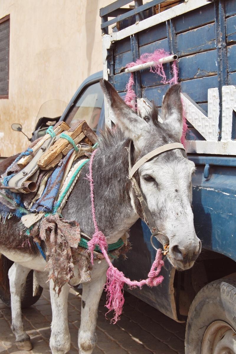 Souk Marrakech (8)