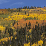 Colorful fall landscapes