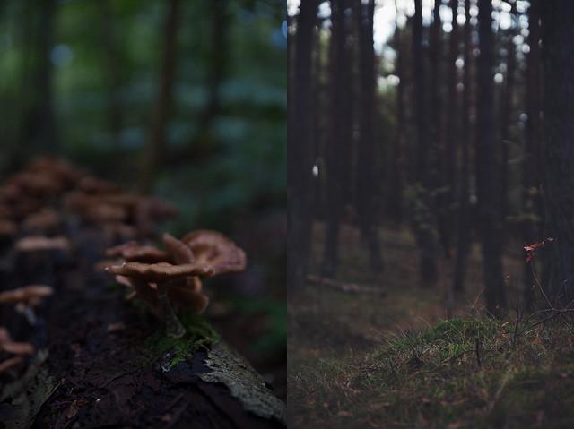 septemberhike_collage1
