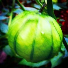 @myblackbookmag #tomatilla