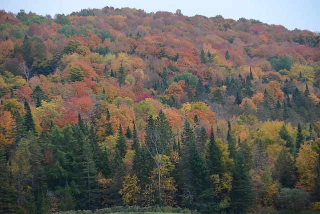 Quilt of color in the NEK