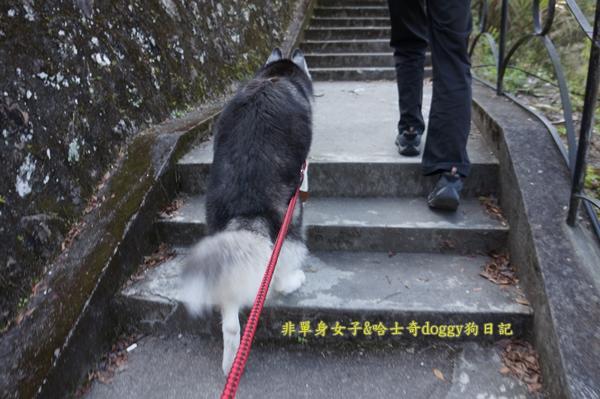 萬大水庫發電廠台電宿舍櫻花02
