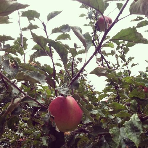cider press! #washingtonapples #nature #fall