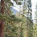 shankargallery posted a photo:Hike Forest With Me !#Genius,#shankargallery,#RichardLazzara,#Travel,#Photowalks,#MeditationHikes,#Photos,#Artist,#ArtForTheSoul,#ArtForSale,#BuyMyArt