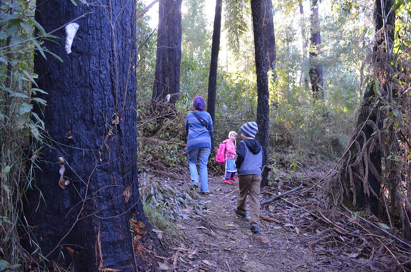 The Beauty Spot Trail - Marysville